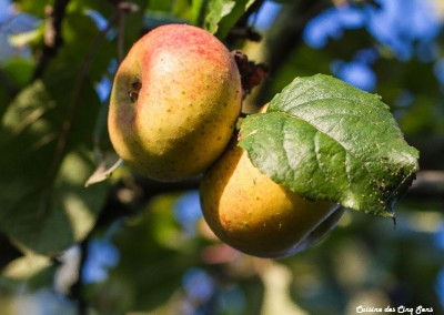 Ambiance - Pommes - 20141003 - 0910